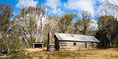 picture of bogong  - McNamara Hut  - JPG