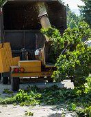 foto of arborist  - Wood Chipper Shredding a Tree into a Truck - JPG