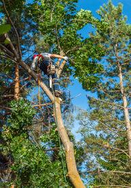 stock photo of arborist  - An Arborist Cutting Down a Tree Piece by Piece - JPG