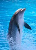 stock photo of dolphins  - A dolphin in a zoo in Tenerife - JPG