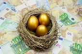 image of laying eggs  - Golden eggs in a nest laying on a bed of money - JPG