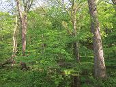 foto of starving  - Spring Time Trees at Starved Rock State Park