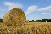 picture of threshing  - agricultural landscape with hay bale in field threshed - JPG