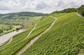 image of moselle  - Vineyards in Germany along the slopes of  river Moselle - JPG