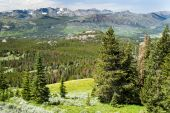 pic of beartooth  - View of alpine wildflowers along the Beartooth Highway in Wyoming - JPG