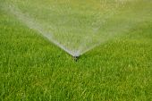 picture of swales  - sprinkler watering the green grass on a sunny summer day - JPG