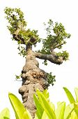 picture of unnatural  - Exotic tree decorated in the garden on white background  - JPG