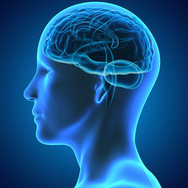 stock photo of frontal lobe  - The human brain division into three parts called the forebrain - JPG