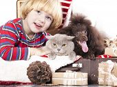 foto of chocolate poodle  - dog and cat and little boy - JPG