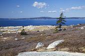 stock photo of shoreline  - Rocky Nova Scotia shoreline near Peggy - JPG