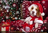 picture of wiener dog  -  dog in a Santa Claus hat and present  - JPG