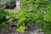 image of ravines  - Big tree with green leaves near ruins of mill in ravine Israel