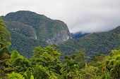 picture of gunung  - Exotic rainforest landscape from gunung mulu national park borneo malaysia - JPG