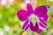 pic of orquidea  - A branch of pink orchid in the garden - JPG
