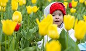 picture of gathering  - Adorable toddler girl gathering tulips in the garden - JPG