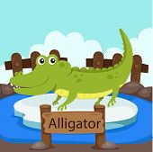foto of alligator  - Illustrator of Alligator in the zoo education - JPG