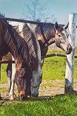 pic of herd horses  - Herd of Beautiful Young Horses Graze on the Farm Ranch Animals on Summer Pasture - JPG