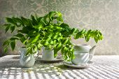 stock photo of crockery  - Still life with a bouquet of polygonatum and white crockery - JPG
