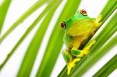 pic of tree frog  - Small green frog sitting on palm tree - JPG