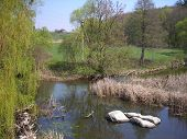 picture of boggy  - River In The Spring - JPG