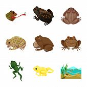 Isolated Object Of Frog And Anuran Sign. Set Of Frog And Animal Stock Symbol For Web. poster