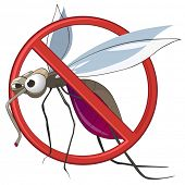 picture of gnats  - STOP Mosquito - JPG