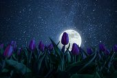 Night Landscape With Tulips Meadow, Stars And Distant Galaxies Above. Miky Way And Moon poster