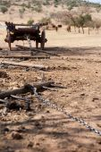 foto of ox wagon  - ox wagon with drag chain and yokes with cattle in the background - JPG