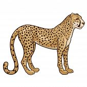 image of cheetah  - Vector illustration of a cheetah isolated on a white background - JPG