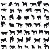 image of bull-mastiff  - Various breeds many dogs black silhouettes - JPG