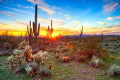 stock photo of ocotillo  - Sun setting over Sonoran Desert in Arizona - JPG