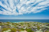 picture of wispy  - Tip of Cape Naturaliste - JPG