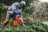 stock photo of man chainsaw  - Professional gardener cutting tree with chainsaw in the garden - JPG