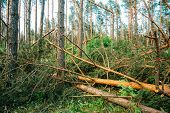 image of hurricane wind  - Windfall in forest - JPG
