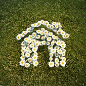 foto of daisy flower  - Fresh Spring Daisie flowers in the shape of a house on a field of grass - JPG