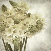 picture of bethlehem  - textured old paper background with start of bethlehem flowers - JPG