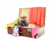 foto of dog clothes  - Cute Shih Tzu in suitcase with clothes isolated on white - JPG