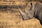 stock photo of rhino  - Lone rhino standing on a open area looking for safety from poachers - JPG