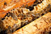 stock photo of working animal  - Busy bees close up view of the working bees on honeycomb - JPG