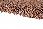 stock photo of mustard seeds  - close up of Brown Mustard Seeds on white background - JPG