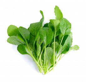 pic of turnip greens  - fresh green turnip on the white background - JPG