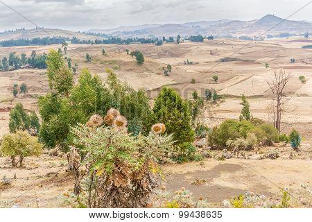 Landscape In Ethiopia Near Ali
