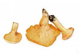 stock photo of chanterelle mushroom  - three fresh chanterelle mushrooms isolated against white studio background - JPG