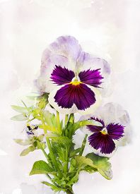 picture of viola  - Illustration of watercolor pansy flower  - JPG