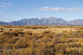 foto of fynbos  - Mountains in the Cape South Africa with dry fynbos vegetation in the foreground - JPG
