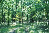 Green Glade In The Forest. Green Forest Walkway. Sunlight Through Trees. T poster