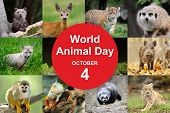 World Animal Day poster
