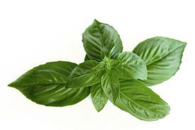 picture of basil leaves  - Close up of basil leaves isolated on a white background - JPG
