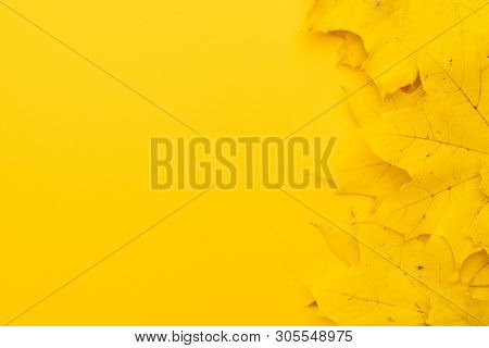 poster of Top View Of Autumn Leaves On Yellow Backdrop. Bright Yellow Autumn Leaves On Vibrant Background. Aut