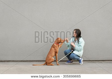 poster of Happy Girl In Casual Clothing Trains A Dog, Background Of Gray Walls, Dog Gives A Foot. Smiling Woma